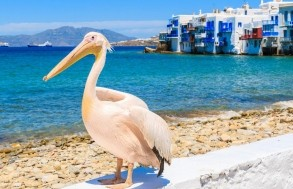 Boat Trips from Paros
